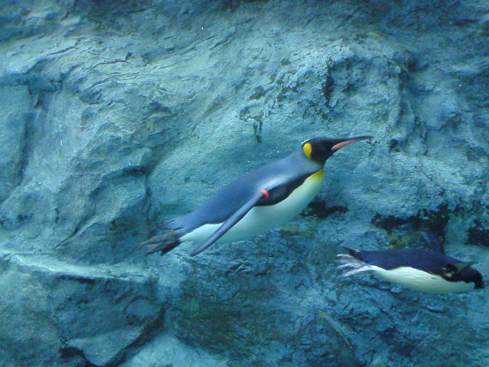 うつくしいペンギン.jpg