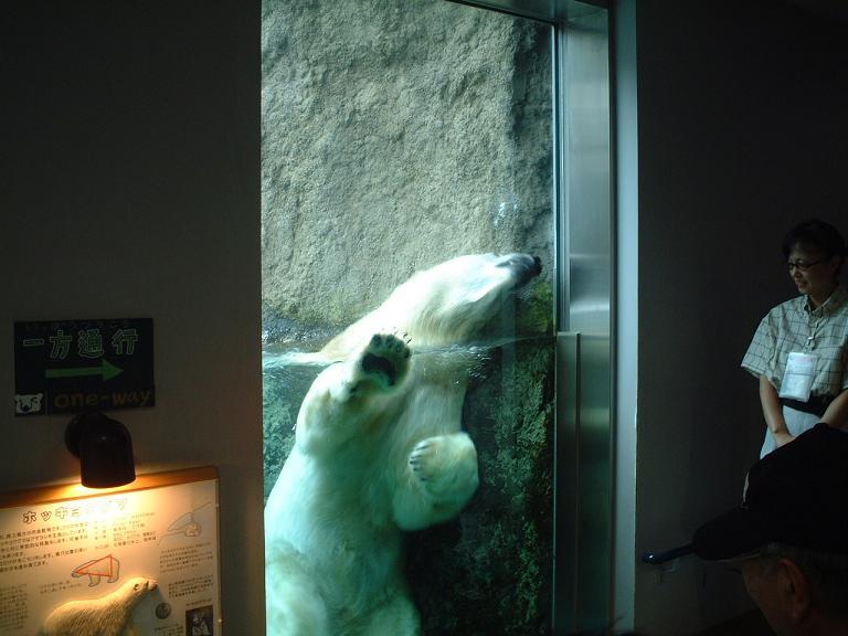 白熊の肉きゅう.jpg
