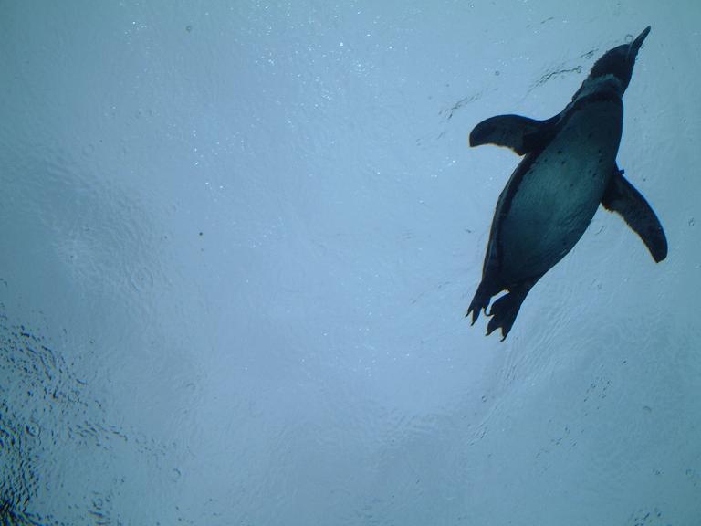 1空飛ぶペンギン.jpg